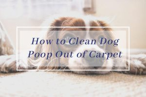 How to Clean Dog Poop Out of Carpet