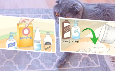 Hydrogen Peroxide & Dish Detergent Solution to Remove Cat Urine from Carpet