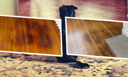 Remove Pet stains From Hardwood Floors